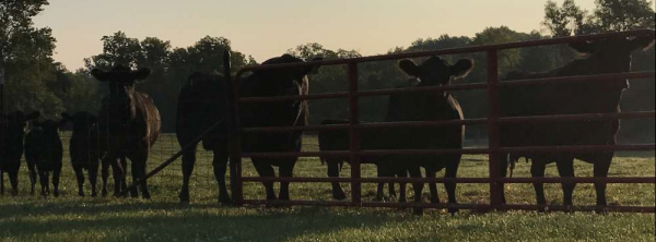 Meadowmere Cattle Co.