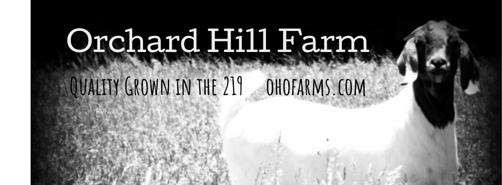 Orchard Hill Farms