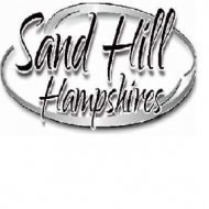 Sand Hill Hampshires