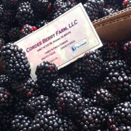 Cordes Berry Farm LLC