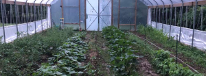Minar Brother's Greenhouse